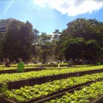 On Urban Cultivation & Soil Quality